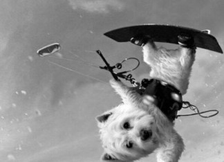 Kite Dog funny fun crazy hilarious Kitesurf kiteboarding kitesurfing kiteboard women kitesurfer sport photo of the day image images photography